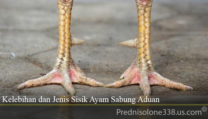 Kelebihan dan Jenis Sisik Ayam Sabung Aduan